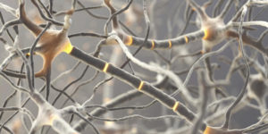 Read more about the article Multiple Sclerosis